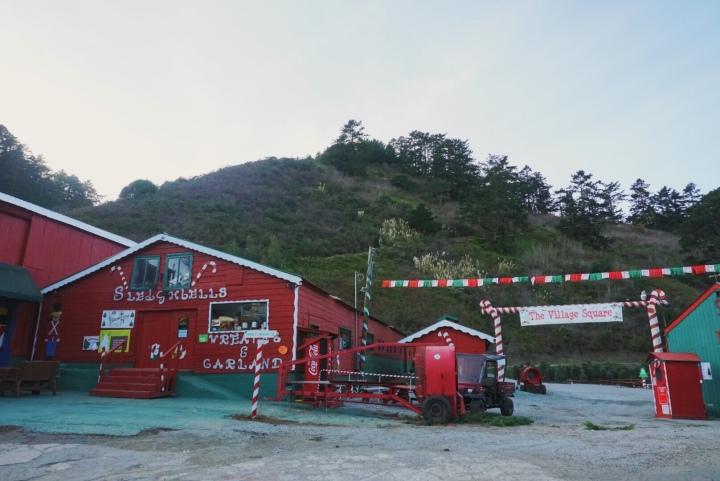 Christmas Tree Farms in the BayArea